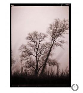 """""""Dans la prairie"""" Photographie Anne Barroil"""